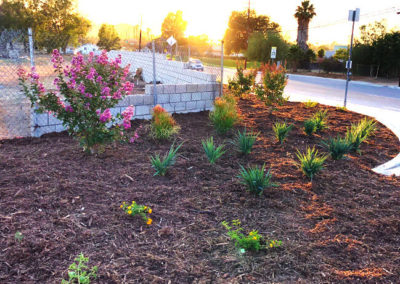 commercial-hoa-landscaping-photo-01-opt